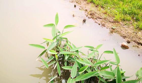 资金可观,项目频现 四川水环境质量改善下重筹