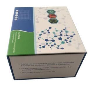 犬白细胞分化抗原8(CD8)ELISA试剂盒